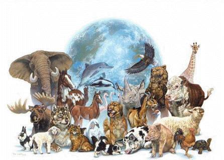external image animales-en-peligro-de-extincion.jpg