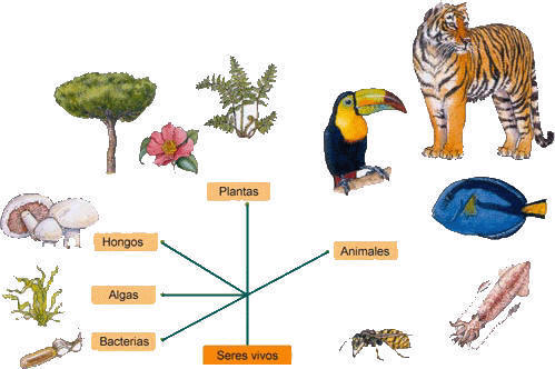 como son las especies: